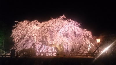 弘前公園さくら